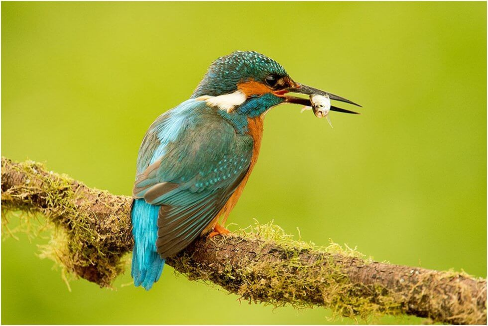 Photographing Kingfishers at Nature Photography Hides