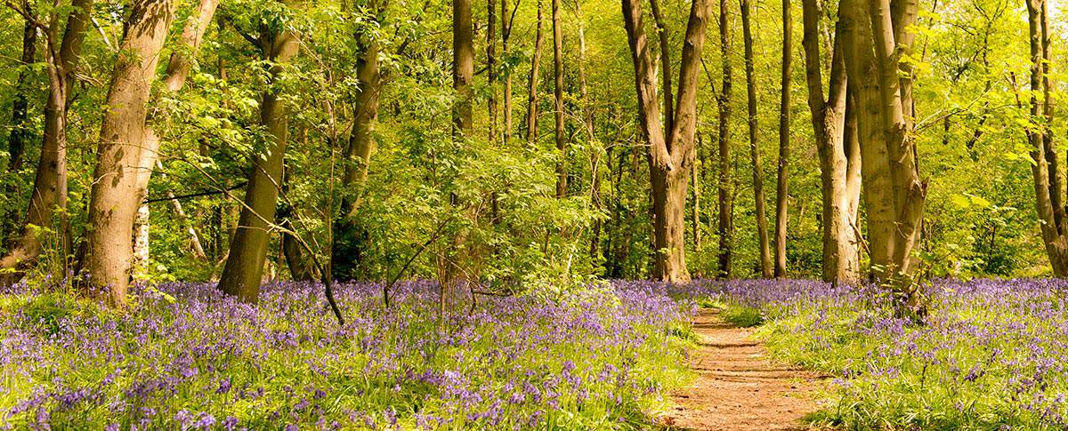 Commercial Photography Nottingham & Derby Bluebells