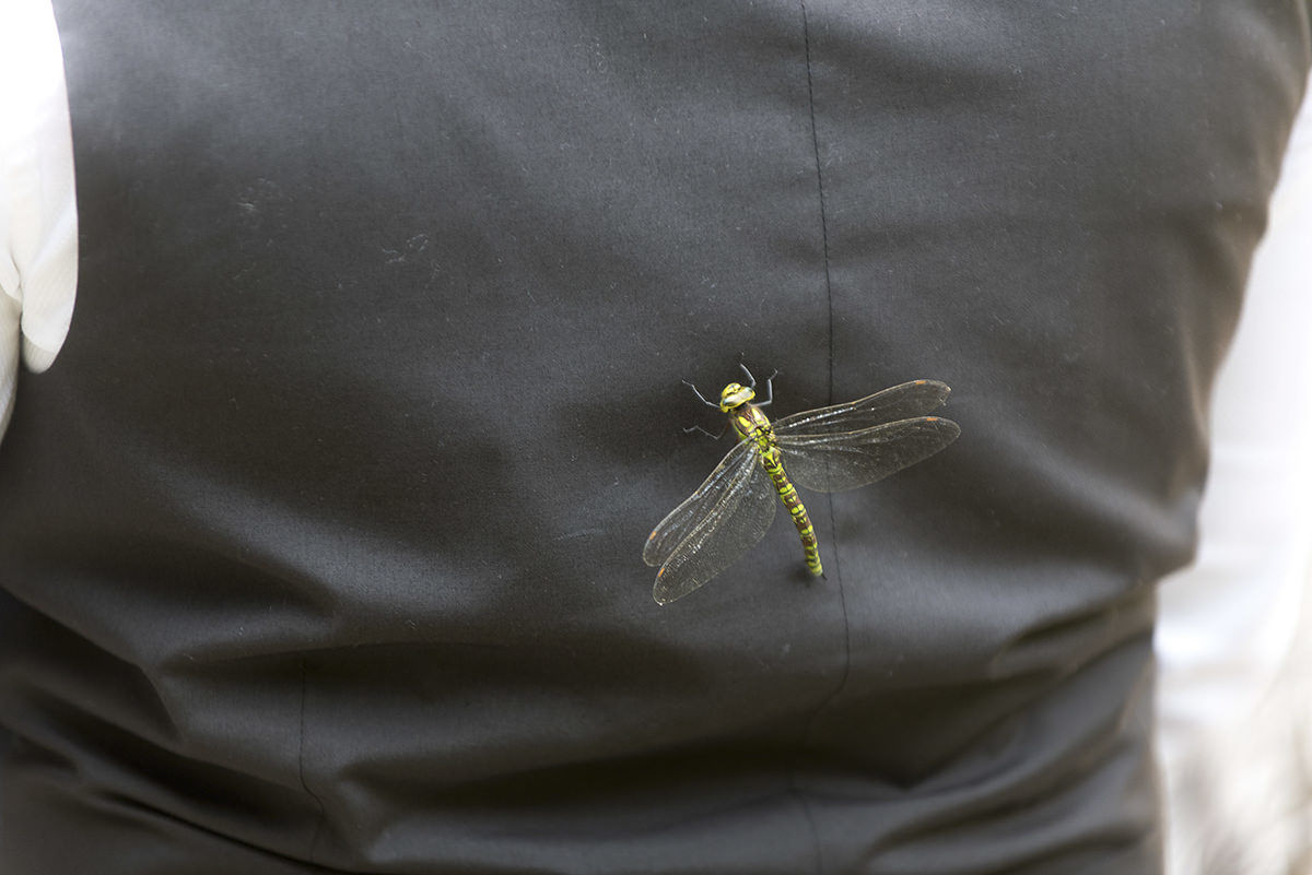 Dragonfly on back