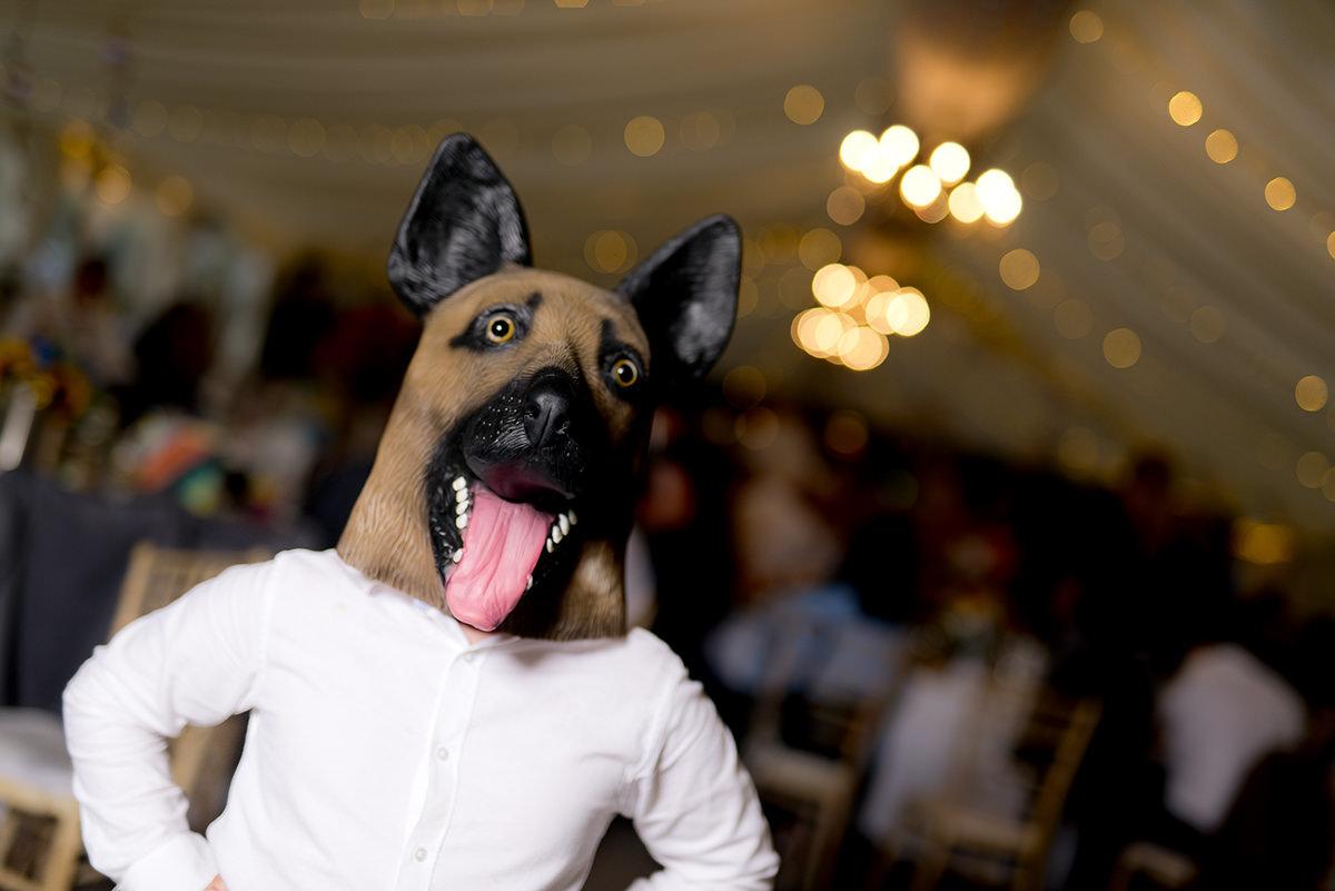Dog on dancefloor