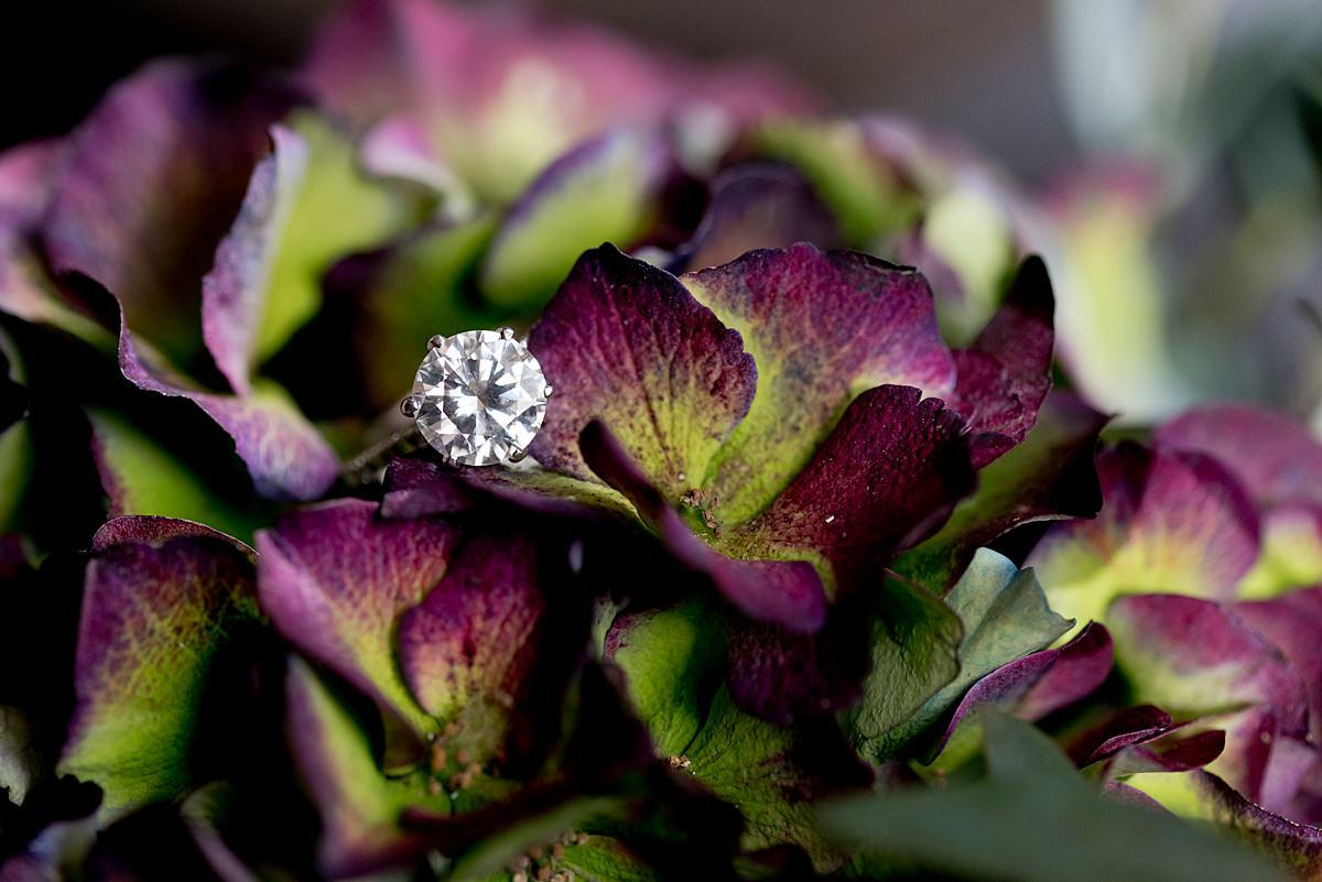 ring shot in a flower